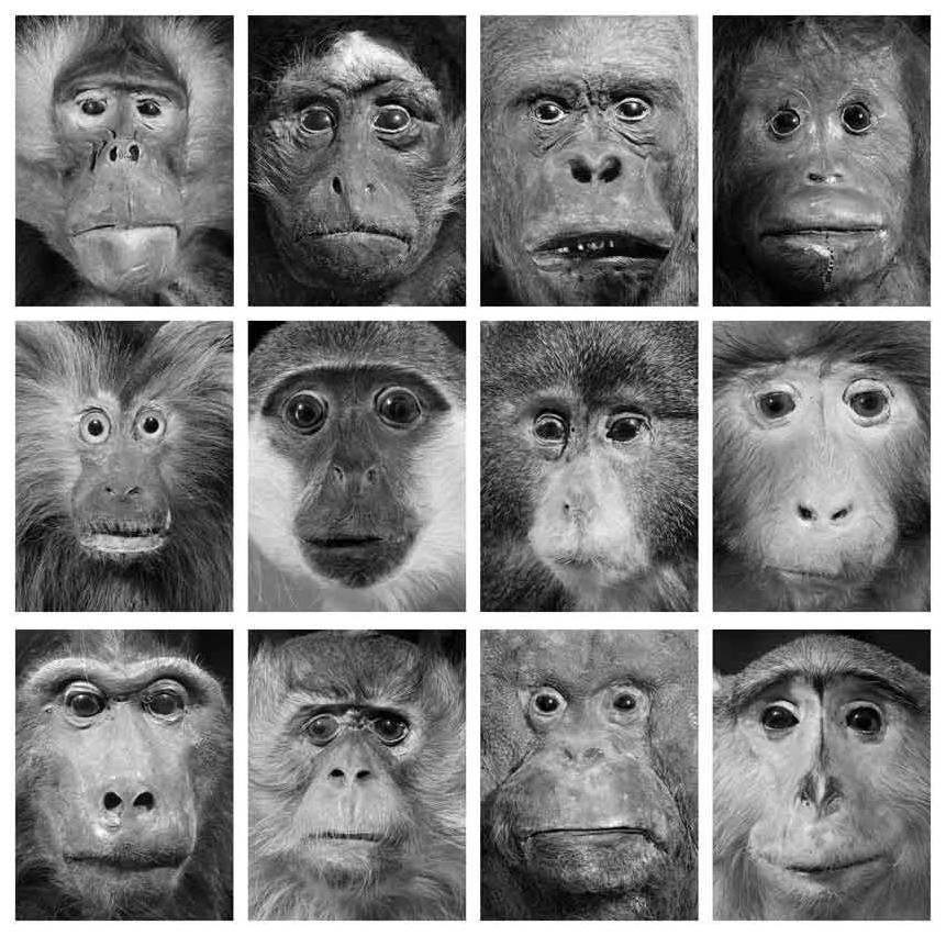 Oleg Kulik. Dead Monkeys,  1998